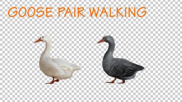 Thumbnail for Goose Family Walk