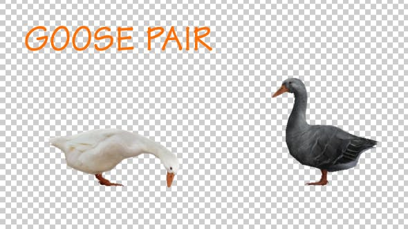 Thumbnail for Goose Pair