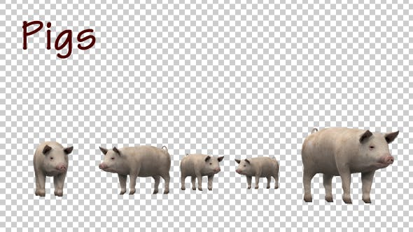 Thumbnail for Pigs