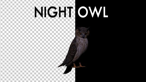 Thumbnail for Night Owl