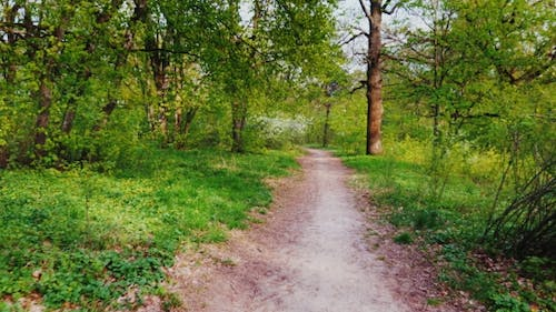 Walk in the Spring Deciduous Forest