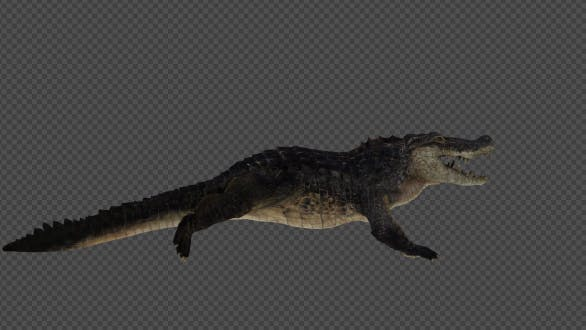 Thumbnail for Crocodile Run And Walk Pack 4 in 1