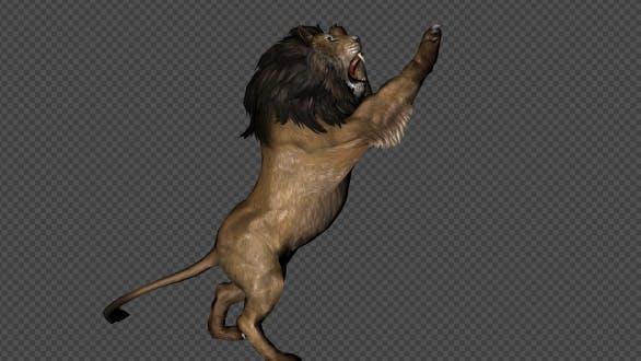 Lion attaque et tir 6 en 1