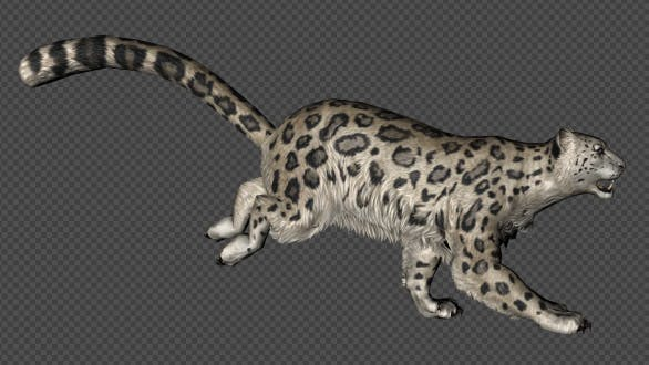 Thumbnail for Leopard Run And Walk Pack 4 in 1