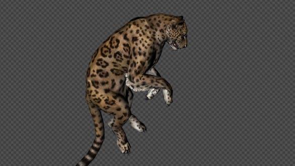 Jaguar mourir et vers le bas dans et vers le bas hors et inactif 11 dans 1