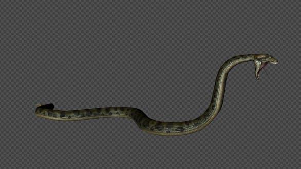 Snake Firing Pack 10 In 1
