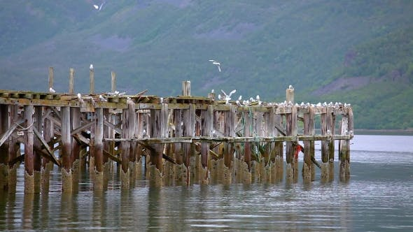 Thumbnail for Beautiful Nature Norway Gulls on the Old Pier