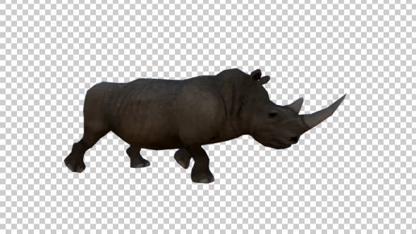 Thumbnail for 3D Rhino Walking