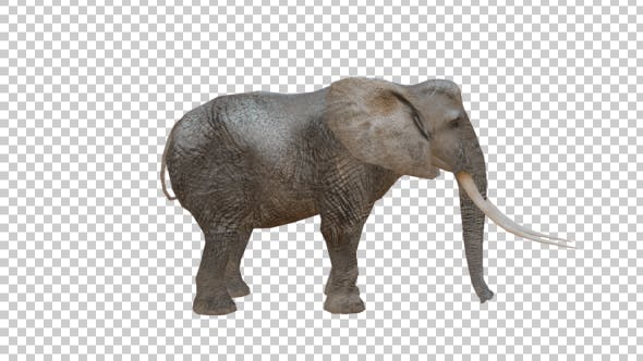 Thumbnail for Realistic 3D Elephant