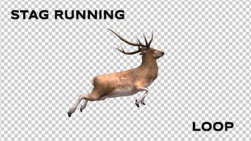 Stag Run