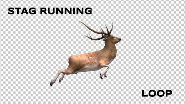 Thumbnail for Stag Run