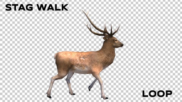 Thumbnail for Stag Walk Animation