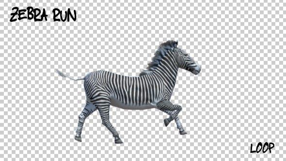 Thumbnail for 3D Zebra Run Animation
