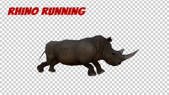 Thumbnail for Rhino Running Animation