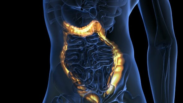 Thumbnail for Anatomy Scan of Human Colon