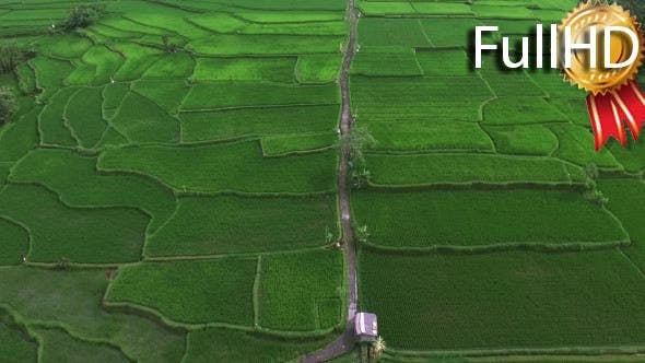 Thumbnail for Top View of a Rural Path through Rice Fields