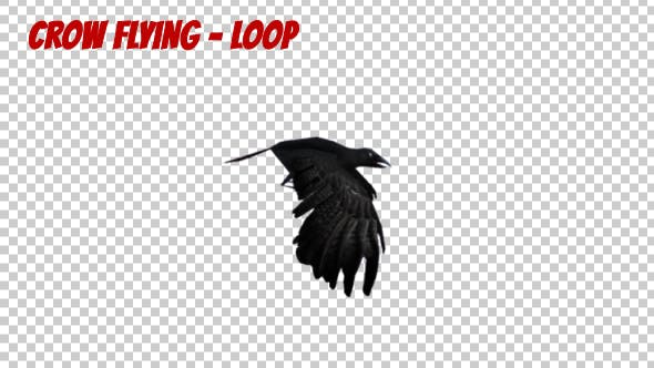 Thumbnail for Cartoon Crow Flying