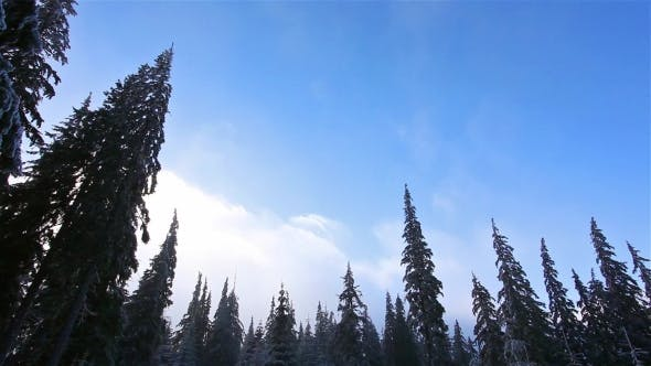 Thumbnail for Winter Landscape in Snow-covered Park