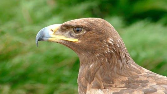 Thumbnail for Eagle Eye