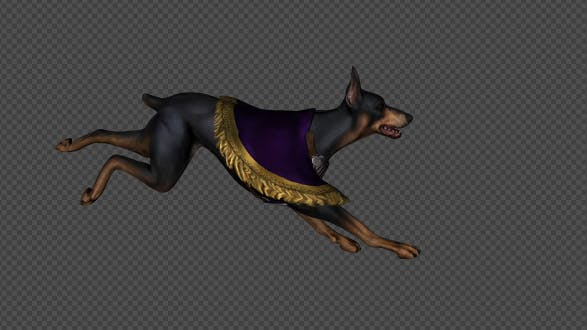 Dark Dog Run And Walk Pack 6 In 1