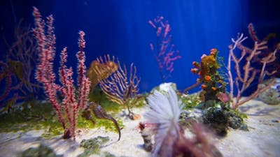 Sea Horse in Aquarium