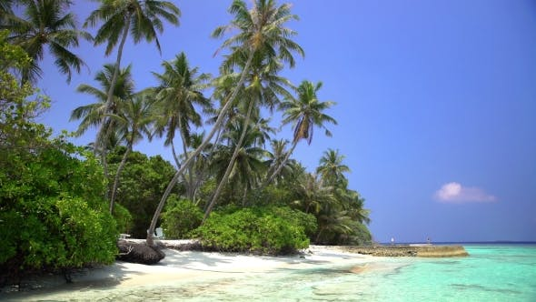 Thumbnail for Tropical Landscape with Palm Trees and the Beach.
