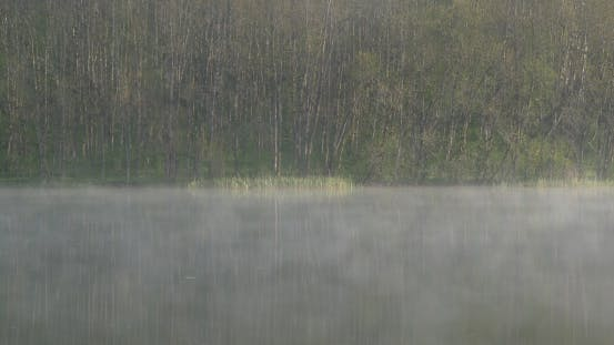 Thumbnail for Branched Forest in the Morning Lake