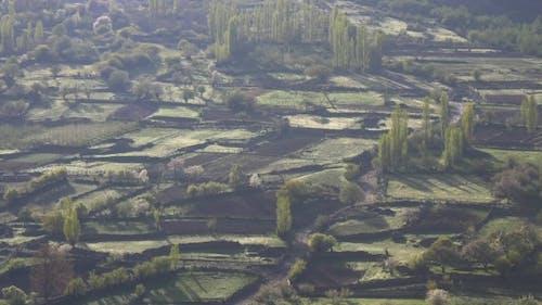 Scraps of Fields