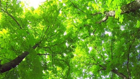 Thumbnail for Summer Deciduous Forest