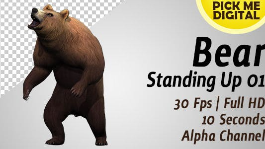 Thumbnail for Bear Standing Up 01