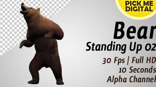 Cover Image for Bear Standing Up 02