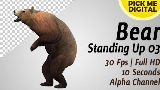 Cover Image for Bear Standing Up 03