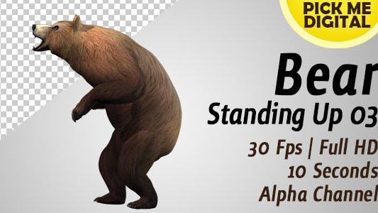 Thumbnail for Bär stehend 03