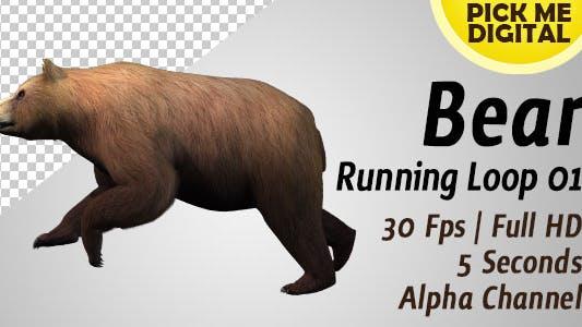 Thumbnail for Bear Running Loop 01