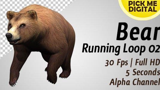 Thumbnail for Bear Running Loop 02