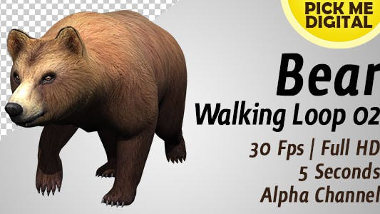 Thumbnail for Bear Walking Loop 02