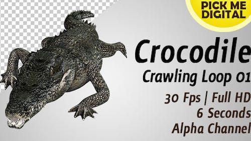 Crocodile Swimming Loop 01