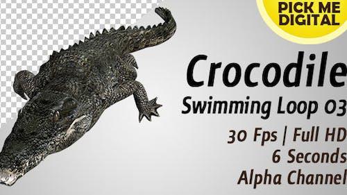 Crocodile Swimming Loop 03