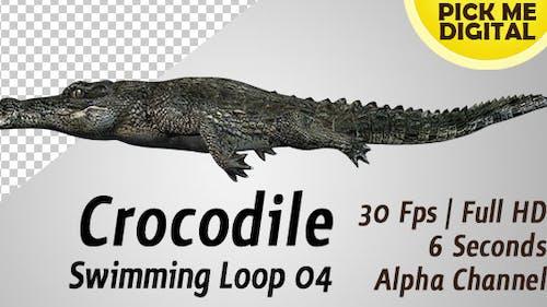 Crocodile Swimming Loop 04
