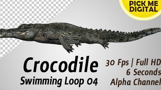 Thumbnail for Crocodile Swimming Loop 04
