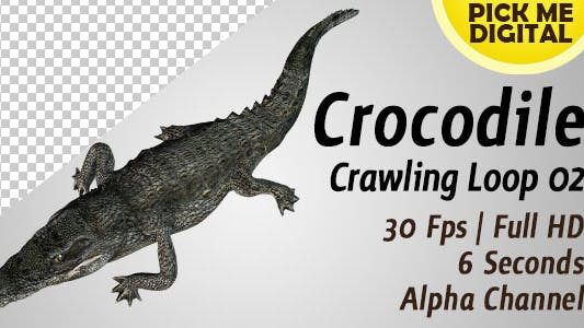 Crocodile Crawling Loop 02