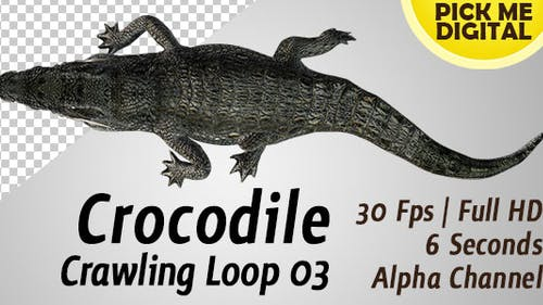 Crocodile Crawling Loop 03