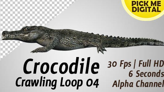 Crocodile Crawling Loop 04