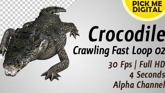 Crocodile Crawling Fast Loop 02