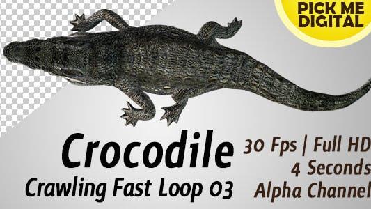 Crocodile Crawling Fast Loop 03
