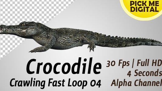 Cover Image for Crocodile Crawling Fast Loop 04