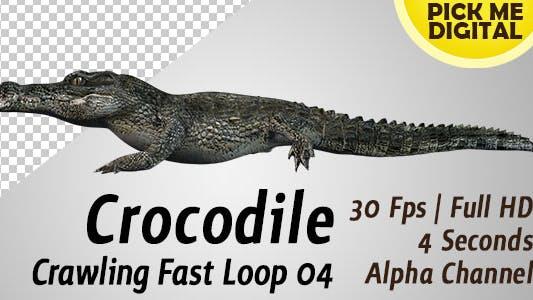 Crocodile Crawling Fast Loop 04