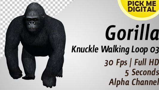 Thumbnail for Gorilla Knuckle Walking Loop 03