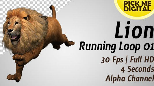 Thumbnail for Lion Running Loop 01