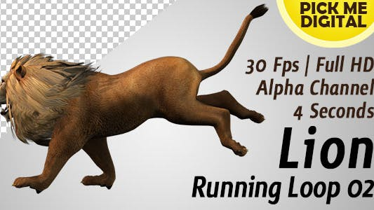 Thumbnail for Lion Running Loop 02
